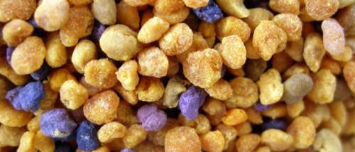 polen-multicolor