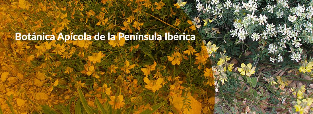 Curso Botánica Apícola de la Península Ibérica