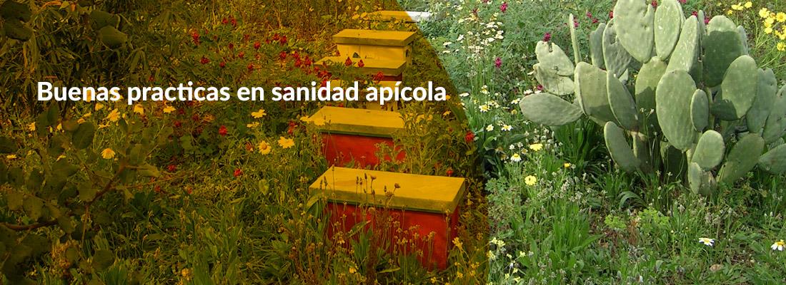 Curso Buenas practicas sanidad apicola pajuelo apicultura